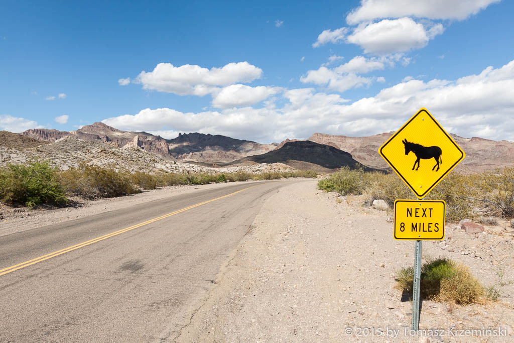 Burros on Oatman-Topock Highway AZ